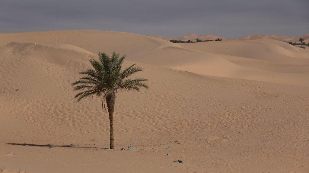 AL – The sandy dunes surrounding Ouargla