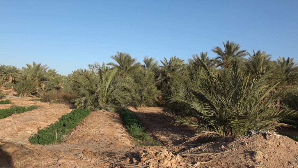 AL – The Ouargla oasis between the sandy dunes and Neogene plateau