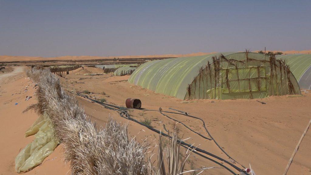 AL – Recent development of greenhouses in the Ouargla region