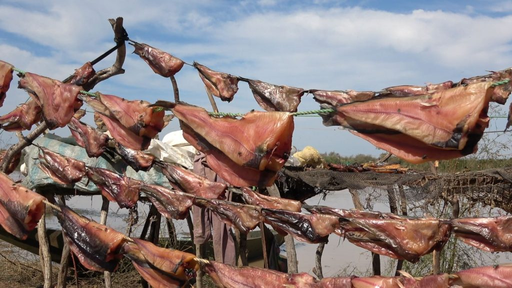 MR – Drying fish in the Diawling National Park